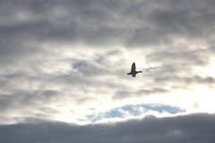 En fågel i himlen Arkivbilder
