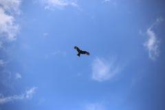 En fågel i himlen arkivfoton