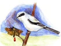 En fågel med en blyertspenna som dras på en filial med en punkterad malteckning Royaltyfria Foton