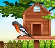 En fågel på pethousen Royaltyfri Foto