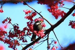 en fågel på trädet, Taiwan arkivfoton
