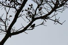 En fågel sätta sig på en trädfilial (Frankrike) Royaltyfria Bilder