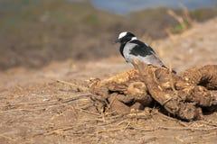 En fågel sitter Arkivfoto