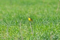 En fågel sitter på en sittpinne Arkivbild