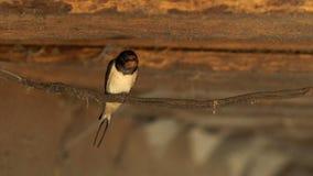En fågel sitter på en pol, en fågel i rummet arkivfilmer