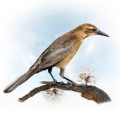 Perching för fågel arkivbilder