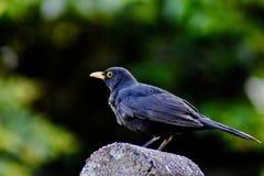 En fågel som sätta sig på ett trädgårds- staket royaltyfria foton