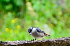 En fågel som sitter på förlagemataren Royaltyfria Bilder