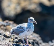 En fågel som tar av från en stång på sucka av ett slut för personcomingcb royaltyfri bild