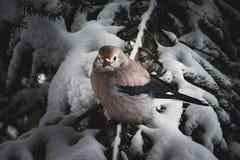 En fågel som vilar i ett träd på en snöig dag arkivbild