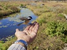 En fågelsikt Arkivfoto