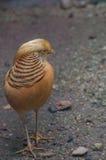 En fågelunge Royaltyfria Foton