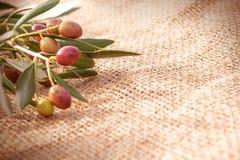 En förgrena sig av oliv på säcktorkduken Royaltyfri Bild