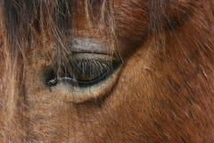 En försiktig och empathetic häst Royaltyfri Bild