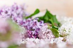En försiktig spridning av blommor av snövita och purpurfärgade lilor royaltyfria foton