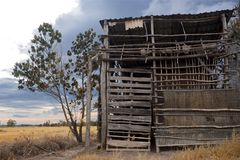 En förstörd bambuladugård royaltyfri bild