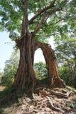 En förstörd tempel på Prasat Yeah Puon i Sambor Prei Kuk i Cambodja arkivbild