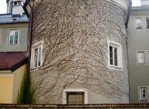 En förträfflig sikt av en forntida byggnad som täckas av murgrönafilialer som ser som en inspirited framsida med ögon och en mun royaltyfria foton