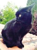 En f?rv?nad gullig svart katt arkivbild
