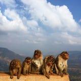 En familj av apor Fotografering för Bildbyråer