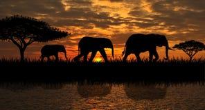 En familj av elefanter på en gå royaltyfria bilder