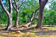 En familj av träd Arkivbilder