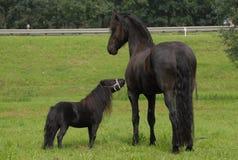 En familj, en stor och liten häst Fotografering för Bildbyråer
