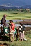 En familj på arbete i risfälten av Madagascar högländer Royaltyfria Bilder