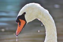 En fantastisk sikt av aswan arkivfoton