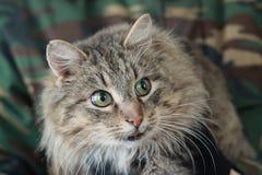 En fet katt fotografering för bildbyråer