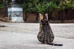 En fet strimmig kattkatt som tillbaka sitter till kameran på vägen Royaltyfri Fotografi