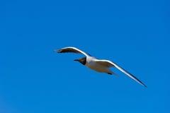 en fågel i himlen Royaltyfria Foton