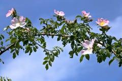 En filial av blommigt royaltyfri bild