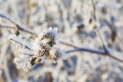 En filial av djupfrysta blommahuvud stod tillsammans i dimman av vintern Royaltyfria Foton
