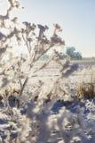 En filial av djupfrysta blommahuvud stod tillsammans i dimman av vintern Arkivfoto