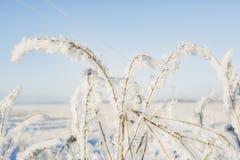 En filial av djupfrysta blommahuvud stod tillsammans i dimman av vintern Arkivbild