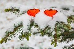 En filial av ett grönt granträd med snö och två röda exponeringsglashjärtor är för jul royaltyfri foto