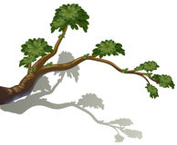 En filial av ett träd Arkivbild
