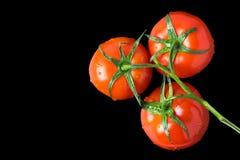 En filial av nya röda tomater på en svart isolerade bakgrund Slapp fokus fotografering för bildbyråer