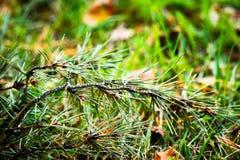 En filial av sörjer lögner i gräset arkivfoton