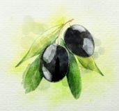 En filial av vattenfärgen för svarta oliv Royaltyfri Foto