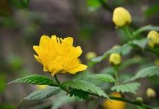 En filial med en gul blomma Royaltyfria Bilder