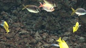 En fisk i fiskbehållare arkivfilmer