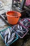 En fisk i Myanmar Arkivfoto