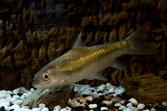 En fisk i vattnet Royaltyfria Bilder