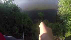 En fisk som fångas plötsligt av ett mansammanträde på en sjöbank i sommar lager videofilmer