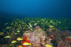 En fisk som jag inte vet i Maldiverna, tog jag det undervattens- fotoet och livlighetblickarna utmärkt Fotografering för Bildbyråer