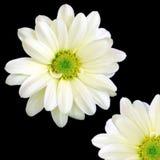 en - fjärdedel Royaltyfria Bilder