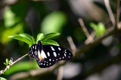 En fjäril royaltyfri fotografi