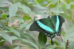 En fjäril Fotografering för Bildbyråer